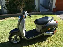 Immaculate 50cc Honda Scoopy For Sale - $1650:00 ono Yanchep Wanneroo Area Preview