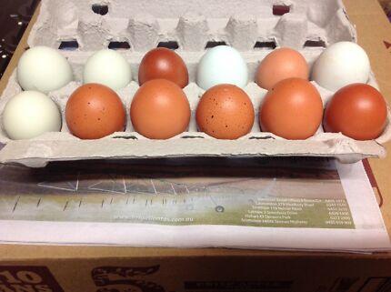 Fertile eggs for sale