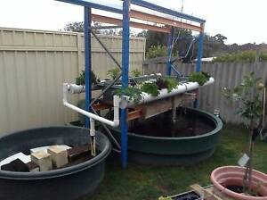 EXCEPTIONAL AQUAPONIC SETUP Wanneroo Wanneroo Area Preview