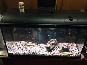 Aquarium 25 gallon à vendre