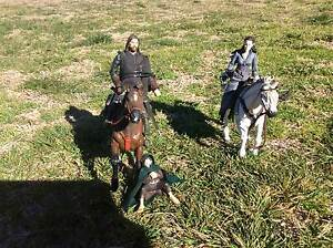 Lord of the Rings Figures and Horses. Armidale Armidale City Preview