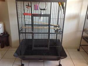 Tame Sun Conure Pair and Large Cage Banks Tuggeranong Preview