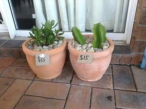 PLANTS IN TERRACOTTA POTS, LOOP. Metford Maitland Area Preview