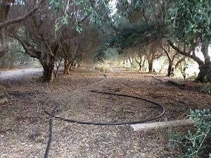 6 acres with 3 bedroom house for sale est olive orchard 130,000 Waikerie Loxton Waikerie Preview
