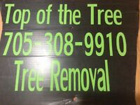 Top of the Tree -Tree removal