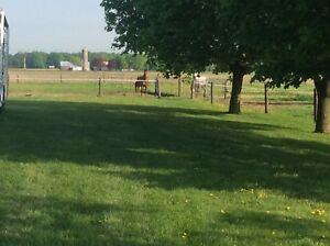 PENSION  pour chevaux, St-Antoine-sur-Richelieu,