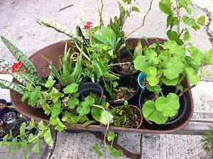 Garage Sale and Garden / Plants Clearance Marrickville Marrickville Area Preview