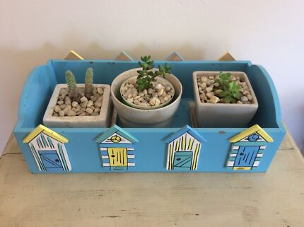 Plants succulent with planter box Maroubra Eastern Suburbs Preview