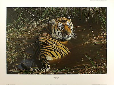 """ANTHONY GIBBS """"One of the Few"""" tiger SIGNED limited ed! SIZE:57cm x 78cm NEW"""