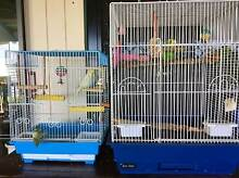 Two female adult budgies and two cages for sale Tugun Gold Coast South Preview