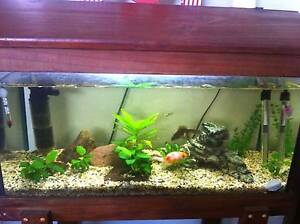 2ft fishtank & rocks, in timber stand and hood Nambour Maroochydore Area Preview