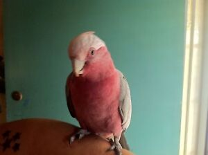 Lost Galah Umina Beach Umina Beach Gosford Area Preview