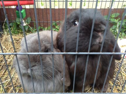 LOST RABBITS Mount Waverley Monash Area Preview