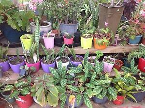 Plant Sale Saturday 29th and Sunday 30th October Bidwill Blacktown Area Preview