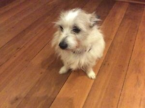Found dog in Maida Vale Kalamunda Kalamunda Area Preview