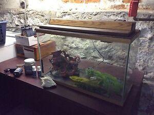 Aquarium and Supplies