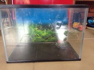 Small fish tank 36cm wide, 26cm high Augustine Heights Ipswich City Preview