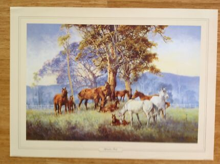 DARCY DOYLE - SEPTEMBER FOALS - LARGE SIZE PRINT - SALE PRICE Edge Hill Cairns City Preview