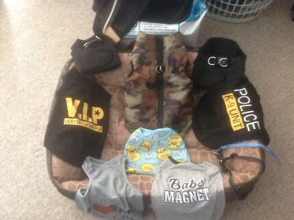 Puppy / Small Dog  - Brand New Bed, Harnesses, Clothing Plus More