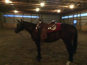 Paint breed mare 6 years