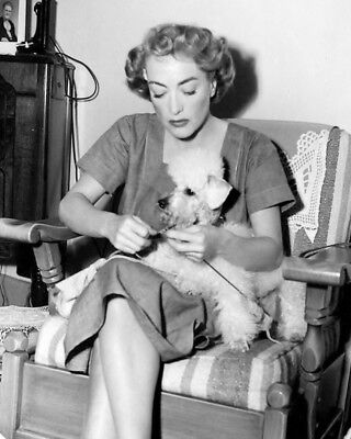 Joan Crawford Knits With Poodle Puppy Dog 1949 Movie Star 8X10 Photo