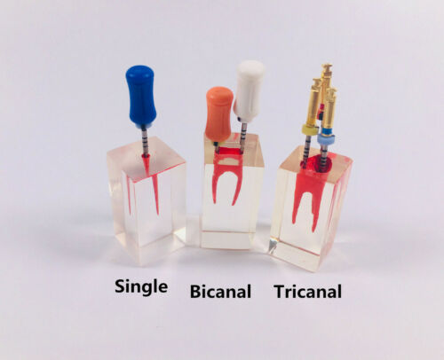 Dental Endodontic Rotary Files RCT Practice Block Root Canal Teeth Study Model
