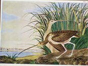 Audubon Bird Prints Set