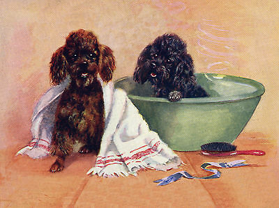 POODLE LITTLE DOGS BATH TIME CHARMING DOG GREETINGS NOTE CARD
