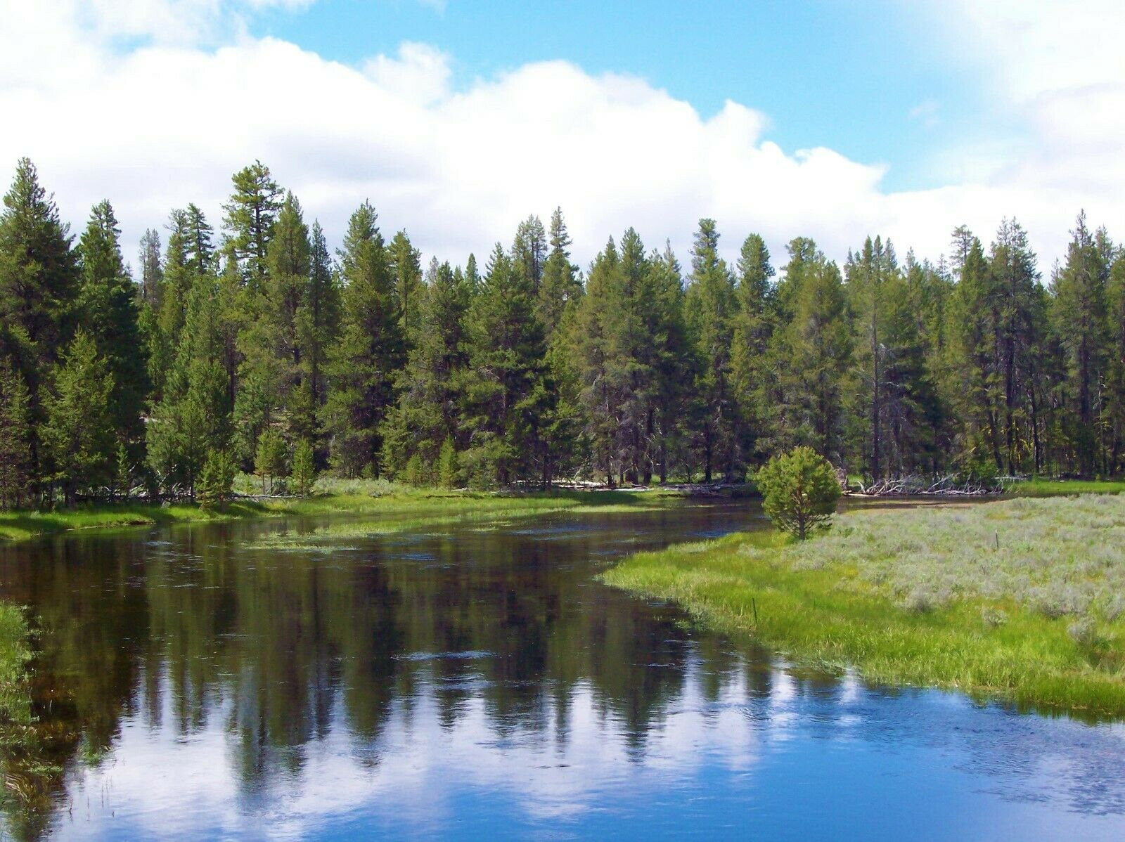 1.55 AC OREGON LAND GORGEOUS RANCH NEAR CRATER LAKE CALIFORNIA NO RESERVE  - $2,650.00