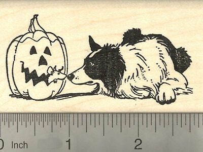 Halloween Border Collie (Halloween Border Collie Dog Rubber Stamp, with Jack o' Lantern Rat J22409)