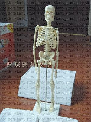 1pcs New 45cm Mini Human Recreational Skeleton Anatomical Model A529 Lw