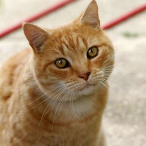 Wanted outdoor cat