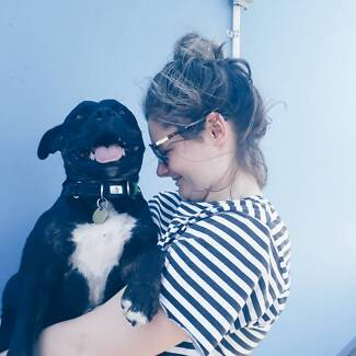 Friendly + Reliable Northside Dog sitter