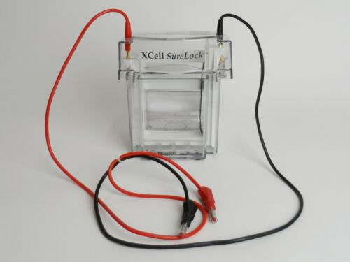 Invitrogen XCell-SureLock Mini Cell Electrophoresis