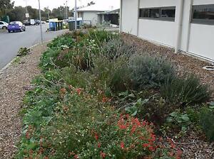Vacancy - Volunteer Community Garden Morphett Vale Morphett Vale Area Preview