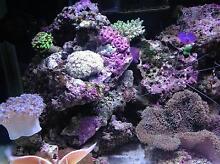 Marine & Fresh Water Aquarium Care Nulkaba Cessnock Area Preview