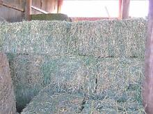 HAY FOR SALE LUCERNE BALES Rosevale Ipswich South Preview