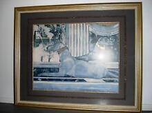 """""""Two Regal Greyhounds"""" Framed Print Cannonvale Whitsundays Area Preview"""