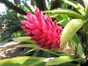 Instant garden - bromeliads - many types, some flowering Oct/Nov Hawthorne Brisbane South East Preview