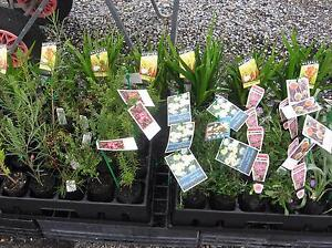 NATIVE AND PERENNIAL PLANTS next sale 30th Sept and 1st October Barossa Area Preview