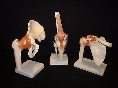 NEW Anatomical Functional Human Shoulder, Hip, Knee Joint Anatomy Model Set
