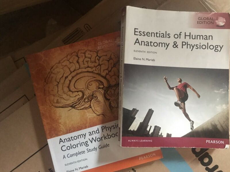 Marieb Essentials Of Human Anatomy And Physiology 11th Edition