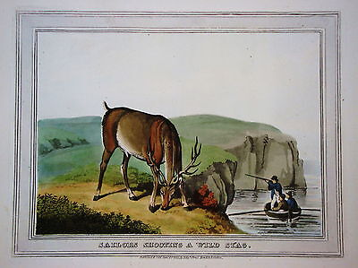 Hirsch Hirschjagd Jäger seltener altkolorierter Kupferstich in  Aquatinta 1813