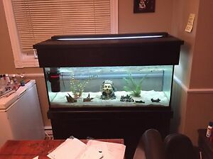 75 Gallon Aquarium w/ Stand + much more!