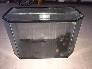 Fish tank with accessories Norman Park Brisbane South East Preview