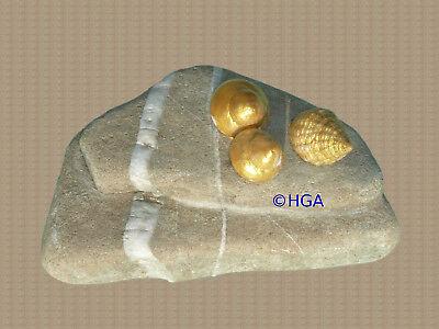 3D-Collage, schöner Stein mit goldenen Schneckengehäusen, Geschenk, Deko