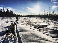 Traîneau à chiens- randonnées et expéditions