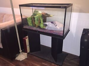 Aquarium with stand and filter.