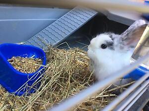 Rabbit Cage & Food Penshurst Hurstville Area Preview
