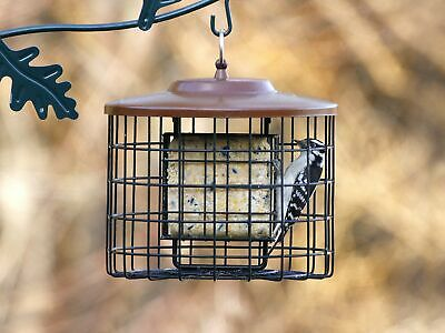Squirrel Cakes - Stokes Select Squirrel-X Squirrel Proof Suet Bird Feeder, 2 Suet Cake Capacity